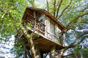 Baumhaus bei Airbnb angeboten Airbnb