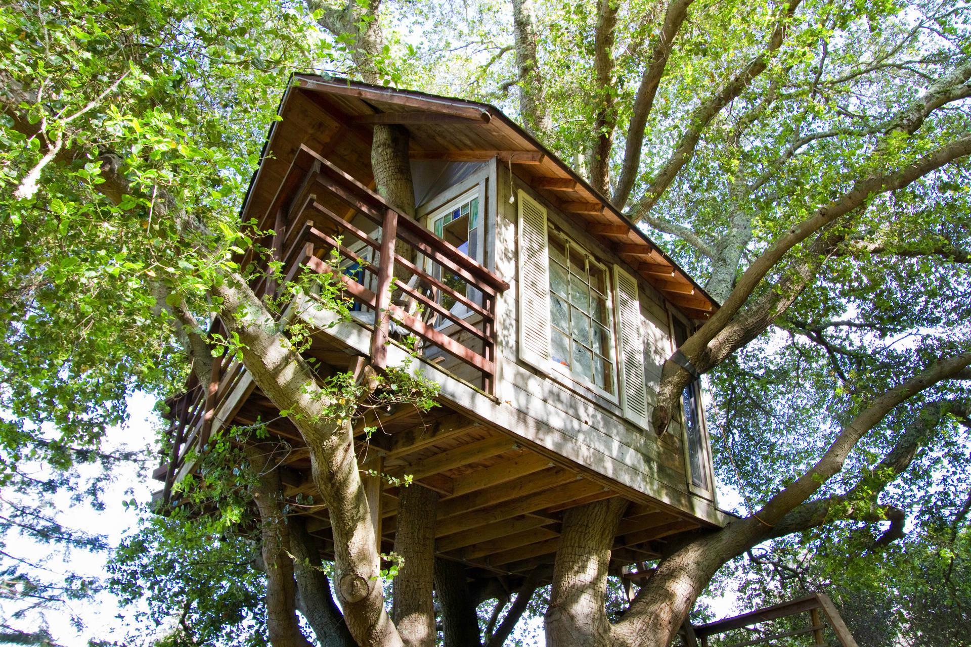 Baumhaus bei Airbnb angeboten